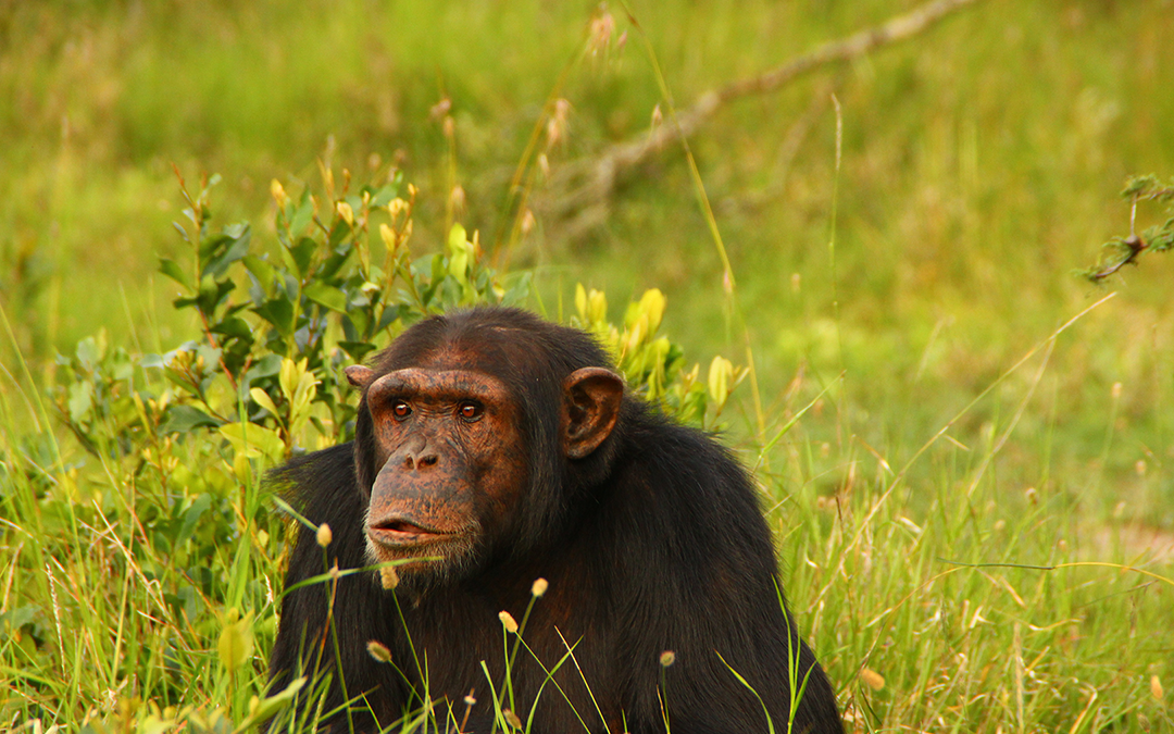 Devastating Floods at Sweetwaters Chimpanzee Sanctuary