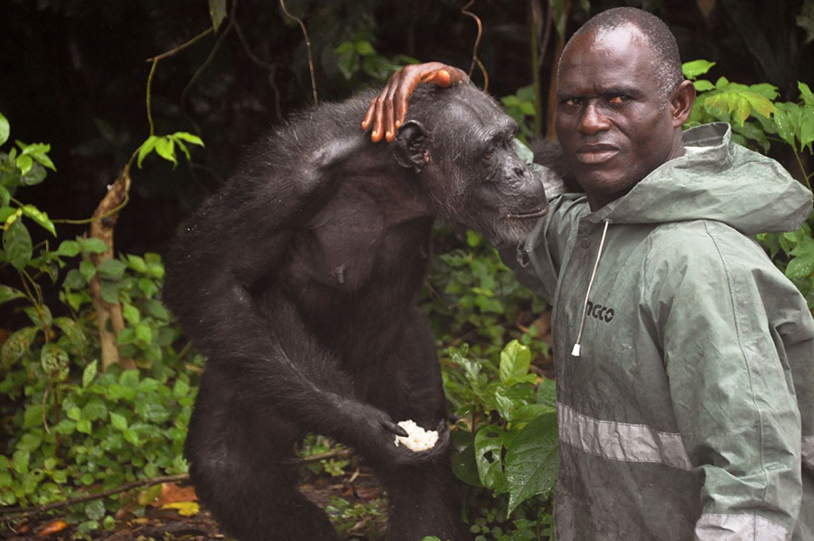 chimps exploited for research left for dead pasa