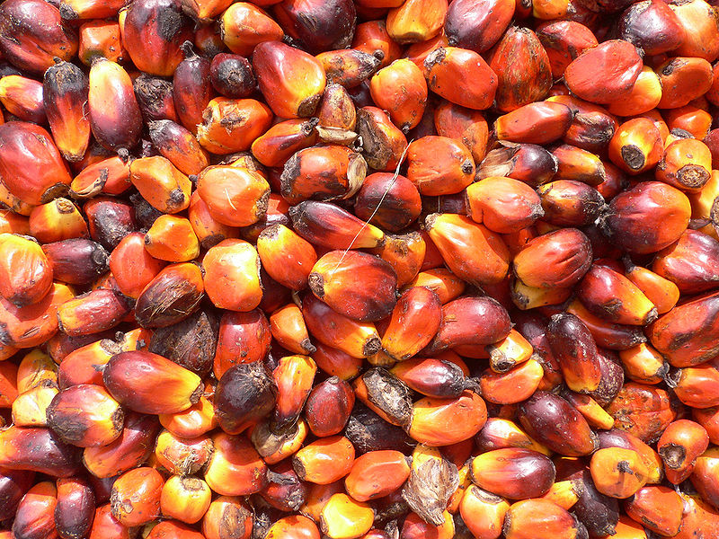 The Devastation of Palm Oil is Now Spreading to African Countries