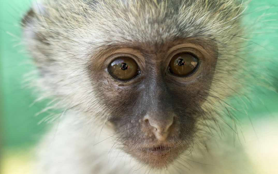 Five Rescued Monkeys Make the World a Better Place