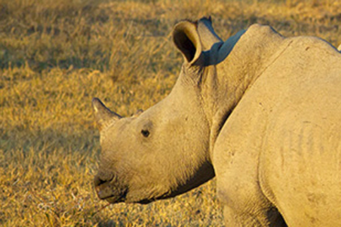 Brutal Attack on Rhino Sanctuary