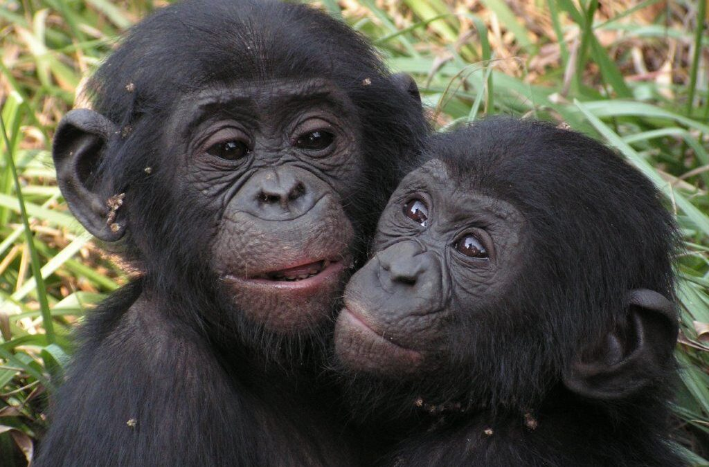 New Study Shows the Impact of PASA Members on Primate Protection