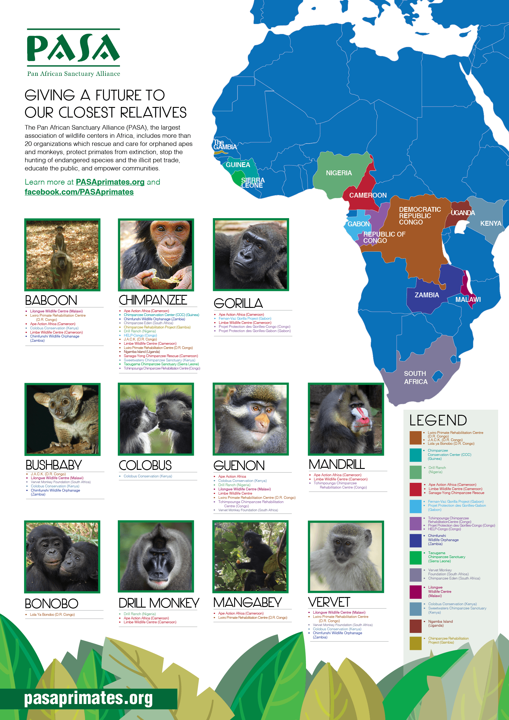 Hope for Future. BAboon, Chimpanzee, Gorilla, Bush Baby, Columbus, Guenon, Mandrill, Bonobo, Drill Monkey, Mangabey, Vervet.
