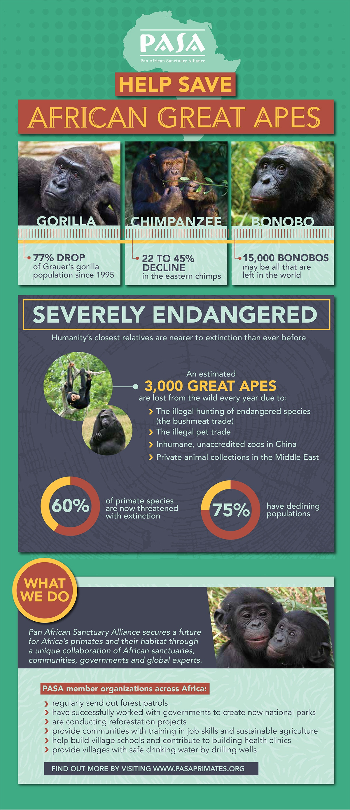 Infographic / Poster: PASA Pan African Sanctuary Alliance's member organizations' goal to Help Save African Great Apes.