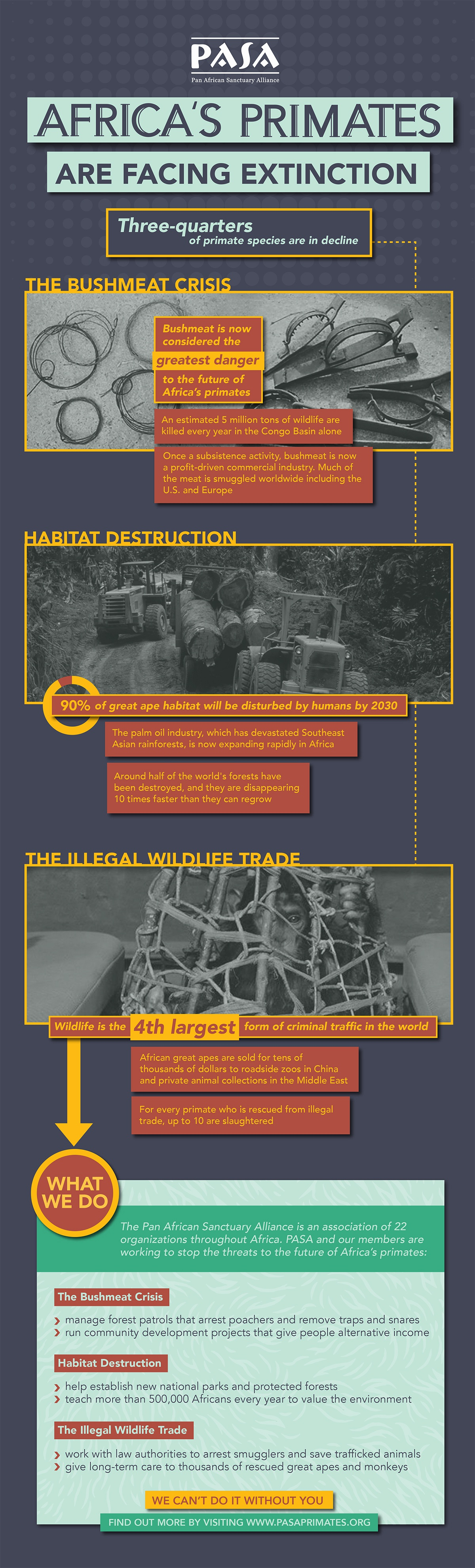 Infographic / Poster for Risk of African Primate Extinction. The bushmeat crisis, habitat destruction, and illegal wildlife trade.