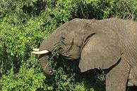 Violent Retaliations to Conservation Efforts Are Escalating
