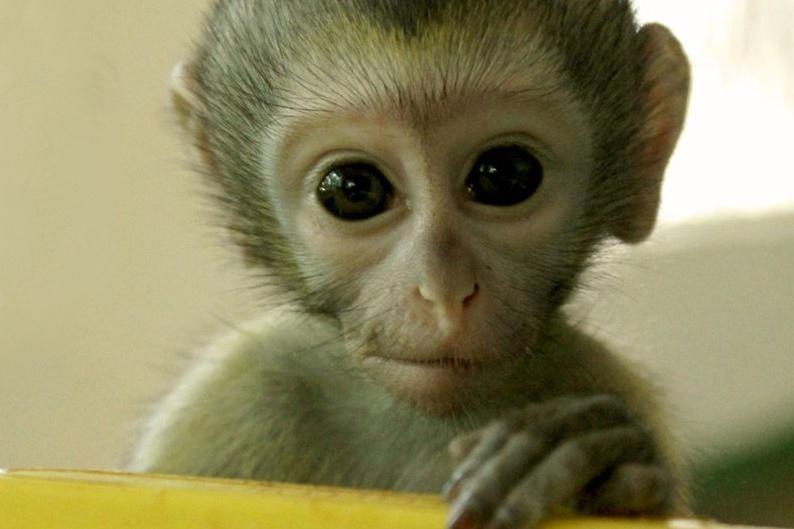 23 Vervet Monkeys Need Your Help to Return to the Wild!