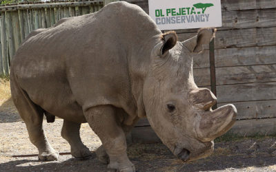 Veterinarian for PASA Sanctuary also Helping to Save a Species