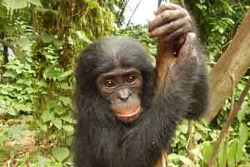 A Reflection on Claudine Andre, a Hero for Bonobos – Part I