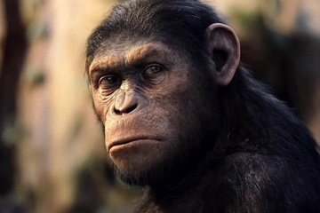 Why Primates Have Never Belonged in the Entertainment Industry