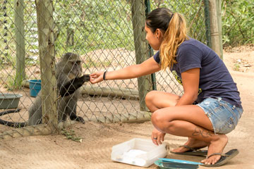 Is Volunteering Abroad with Primates for You?