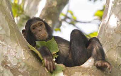 Primate Heroes: PASA's Amazing Women Leaders