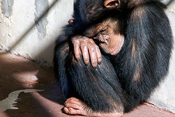 How the Illegal Pet Trade Endangers Primates