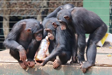 Primate Enrichment at PASA Wildlife Centers