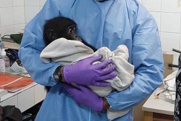 Research at PASA Wildlife Centres