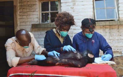 Women in Conservation: Protecting Africa's Primates, Serving as Role Models