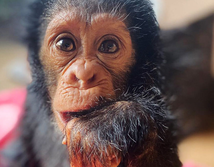 An Inside Look at Primate Rescues