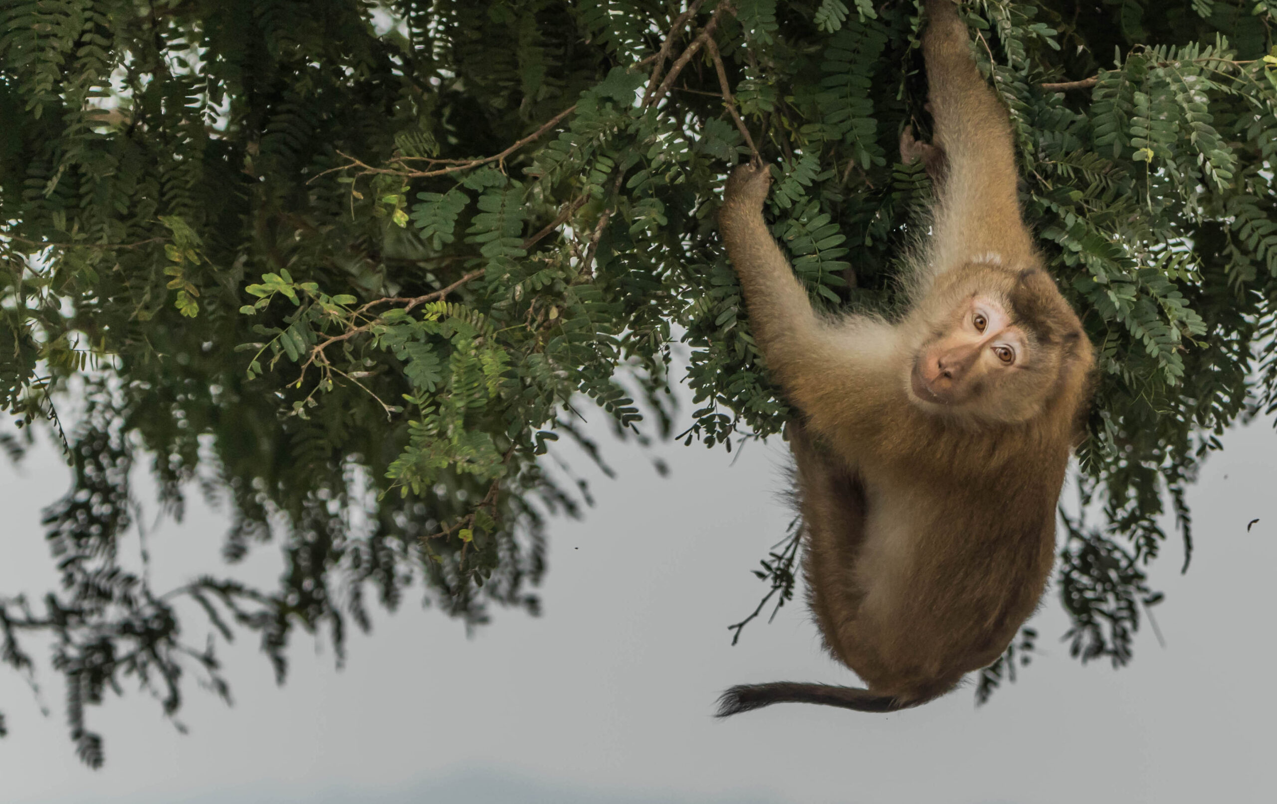 A baby chimpanzee